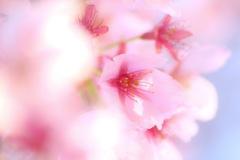 あなたに微笑む春