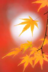 秋の木漏れ日(2015)