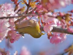 春は近いぞ