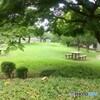 新緑 新横浜公園
