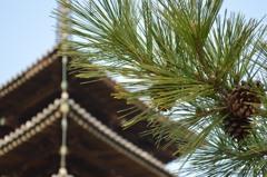 法隆寺の松