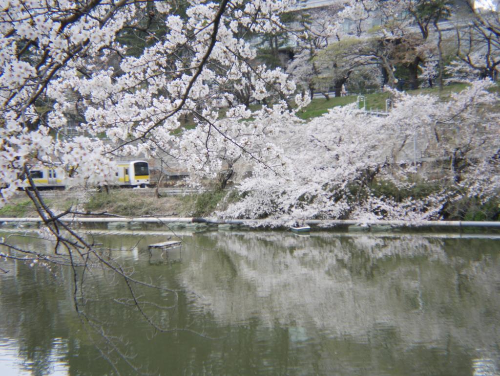 ホルガで春