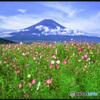 コスモスに浮かぶ富士山