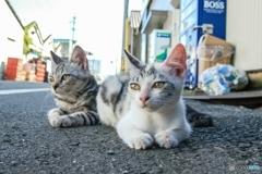 路傍の仔猫
