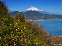ミカンと海と富士山
