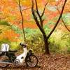 紅葉とカブ