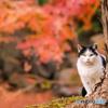 秋と紅葉と猫