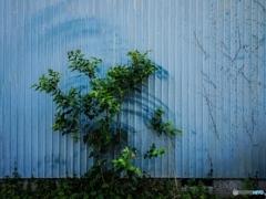 植物ワイパー