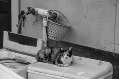 猫のいる生活