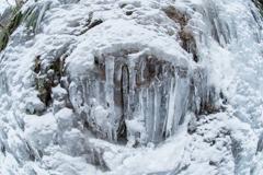 氷になった白熊、牙をむく