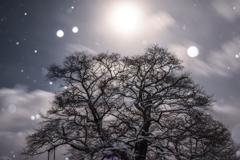 月明かり時々雪