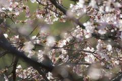 花は桜木、人は武士・・・(・_・)