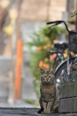 ネコのいる町
