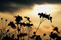 夕日、そして花々