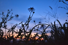 たくましく生きる雑草そして花