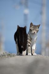行くネコ・来るネコ