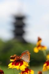 蝶に花、そして五重塔