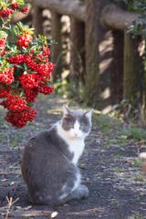 猫とピラカンサ