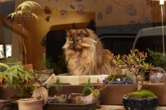 盆栽管理人のアルバイト、始めました
