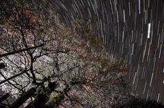 夜桜ー星めぐり