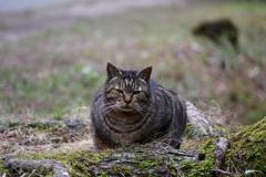 ぱっと見、ネコに見えるツチノコ