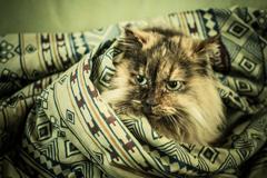 包まれて、猫