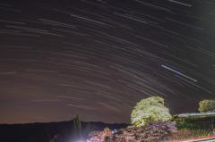 Sakura with stars