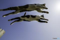 Sky-Jump!