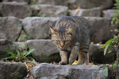 猫背の猛獣