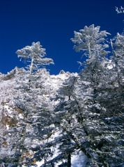 Frozen winter 2
