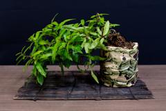 盆栽はペットです 7