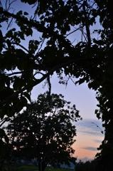 木々は騒ぐ