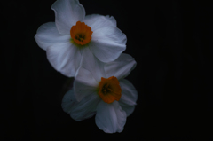庭に咲いた花1
