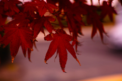 紅葉の終わり
