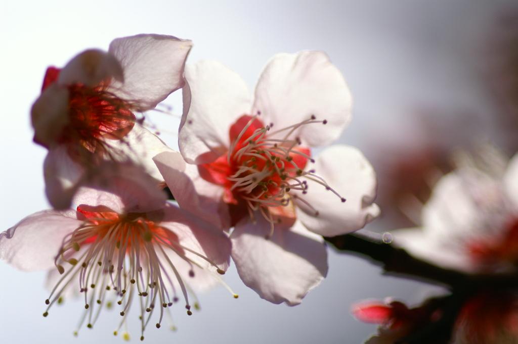 春の薄陽を受けて