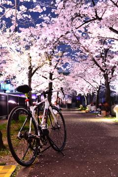 cinelli 夜桜