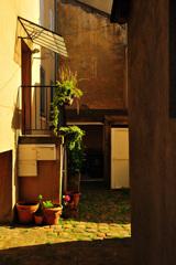 紫陽花のある中庭の夕暮れ