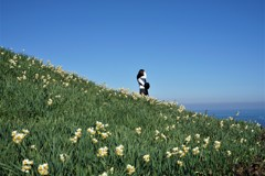 スイセンの香る丘
