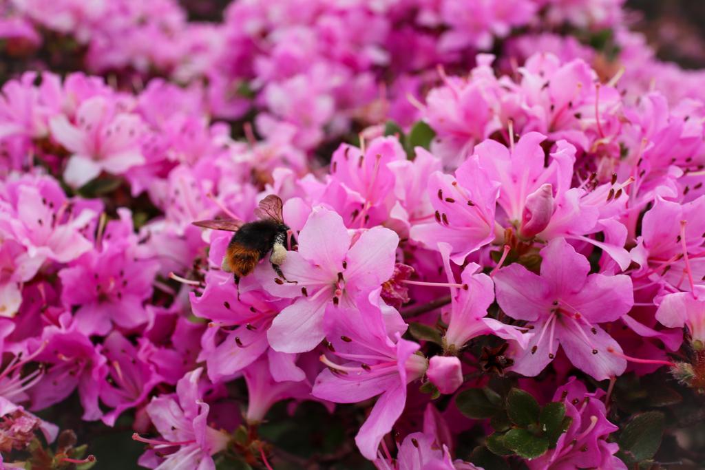 可愛い蜂さん