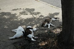 木陰の昼寝