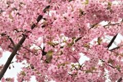 春色に包まれて
