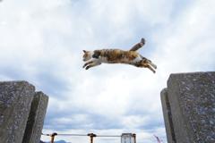 豪快なジャンプ!