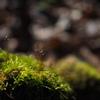 森の小径にて