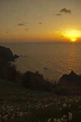 水仙と眺める夕陽