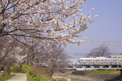 桜と現役最古のトラス式橋梁