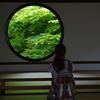 心の窓を通して眺める新緑