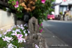 さんぽ道のお花