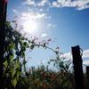 太陽に笑う花たち