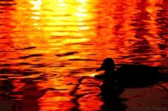秋の水面のシルエット
