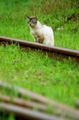 さすらい猫の廃線さんぽ